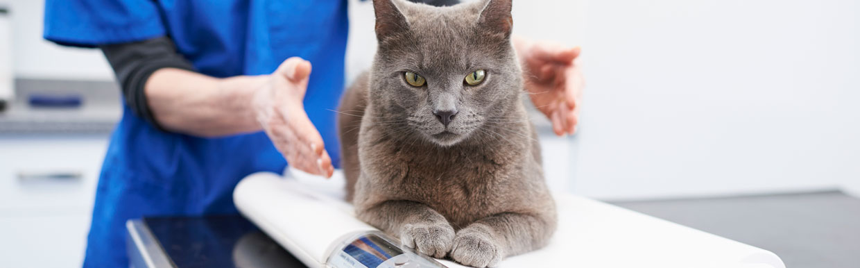 Vaccinating your cat